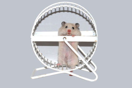 white hamster in wheel