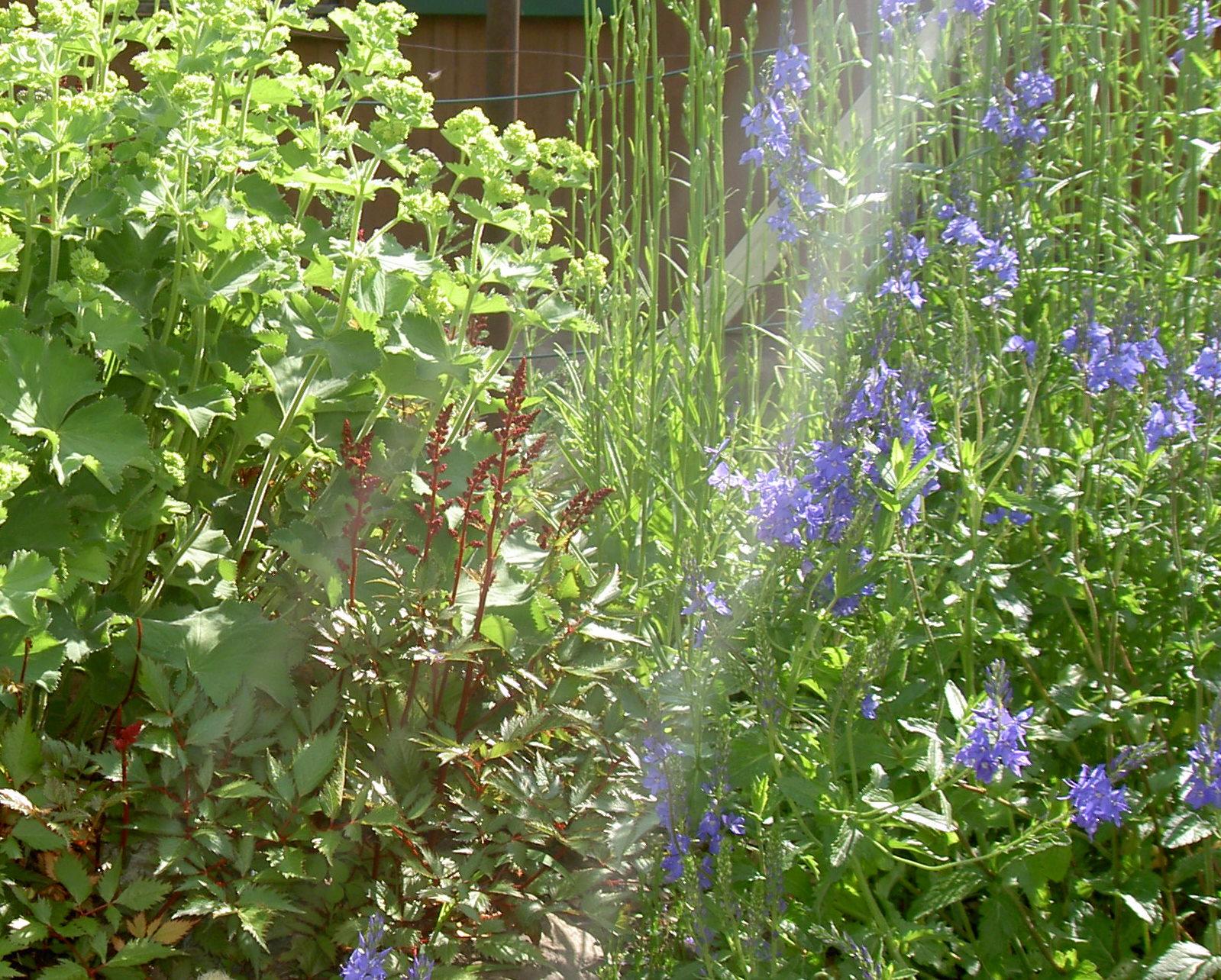MOTIVATION  . mein Garten ist ja sowas von sinnlich!