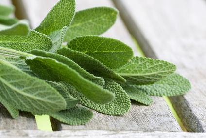 PFLANZENPORTRAIT: Salvia – Salbei, mehr als nur Schluckbeschwerden